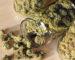 marijuana-storage-750x375